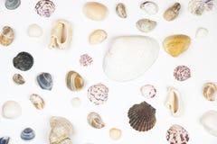 Vários shell isolados no branco Fotos de Stock