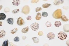 Vários shell isolados no branco Foto de Stock