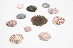 Vários shell isolados no branco Foto de Stock Royalty Free