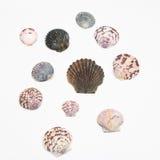Vários shell isolados no branco Imagens de Stock