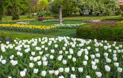 Vários tipos bonitos das tulipas no jardim botânico da casa de campo Taranto em Pallanza, Verbania, Itália foto de stock