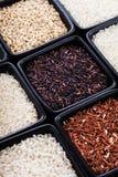 Vários tipos de arroz Imagem de Stock