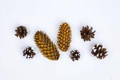 Vários tipos de cones Foto de Stock Royalty Free