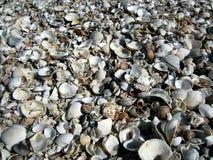 Vários tipos de seashells Foto de Stock Royalty Free