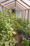 Vários vegetais e ervas na estufa Fotografia de Stock Royalty Free