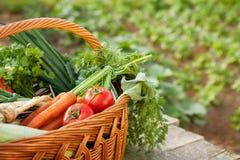 Vários vegetais na cesta de vime Fotos de Stock Royalty Free