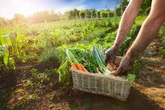 Vários vegetais nas mãos da cesta e dos fazendeiros Foto de Stock Royalty Free
