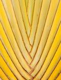 Vástago del plátano Fotografía de archivo libre de regalías