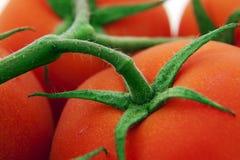 Vástago del tomate imagen de archivo