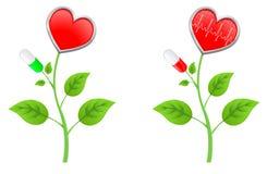 Vástago verde con las hojas con un corazón rojo Imagenes de archivo