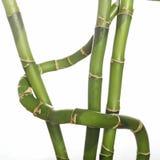Vástagos de bambú Fotografía de archivo