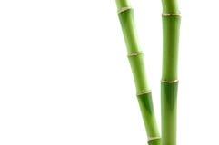 Vástagos de bambú afortunados fotos de archivo