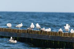 Vögel auf Sporn stockfoto