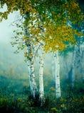 Väcka av hösten Arkivbild