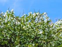 Väcka av våren royaltyfria foton