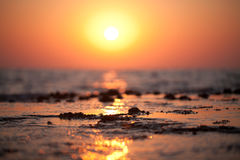 väcka hav Fotografering för Bildbyråer