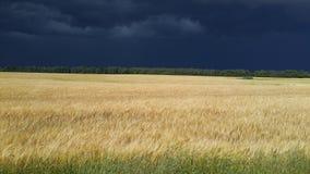 Väder Arkivbild