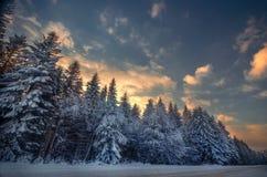 Härlig vinterskog Fotografering för Bildbyråer
