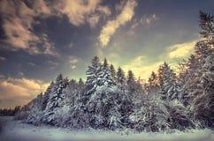Härlig vinterskog Arkivbild