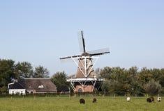 Väderkvarn De Hond i Moddergat, Nederländerna Arkivfoto