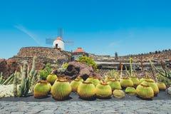 Väderkvarn i tropisk kaktusträdgård i den Guatiza byn, populär dragning i Lanzarote Royaltyfria Foton