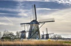 Väderkvarnar och vasser i Kinderdijk royaltyfria bilder