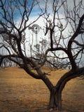 Väderkvarnar som inramas av trädfilialer Royaltyfri Foto
