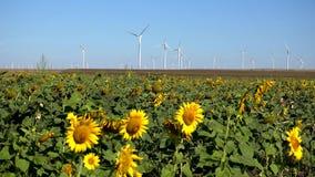 Väderkvarnar vindturbiner, åkerbruk makt för generator för vetefält, elektricitet stock video