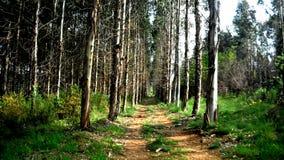 Väg över skogen Arkivbilder