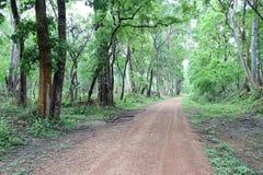 Väg att göra grön skogen Royaltyfria Foton