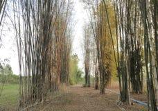 Väg av bambu arkivfoto