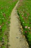 Väg av flora Arkivfoton