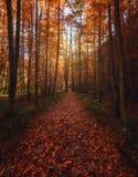 Väg av hösten royaltyfria foton
