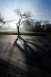 Väg av träd i fältet med abstrakt skugga Fotografering för Bildbyråer