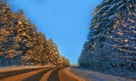 Väg bland de högväxta snö-täckte träden Royaltyfria Bilder
