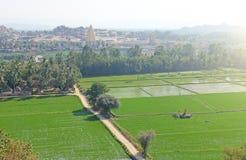 Väg bland gröna risfält och en terrass i byn av Hampi Palmträd sol, risfält, stora stenar Tropiskt exotiskt royaltyfri bild