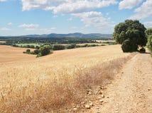 Väg bredvid vetefält på den franska vägen Camino de Santiago Spai arkivbilder