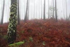 Väg dimma, skog, Portugal Arkivbilder
