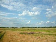 väg för 3 fält till Royaltyfri Fotografi