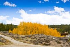 väg x för 4 colorado Arkivbilder