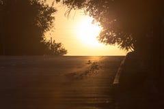 Väg för bilar på den guld- solnedgången Royaltyfri Fotografi