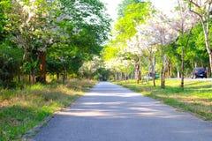 Väg för cykel och inkörd trädgård Arkivfoton