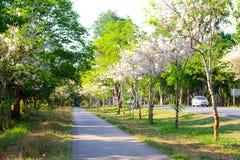 Väg för cykel och inkörd trädgård royaltyfri fotografi