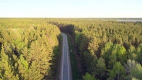 Väg för flyg- sikt med körning av bilar bland pinjeskog stock video