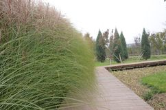 Väg för gröna växter för natur för landskap härlig royaltyfri foto