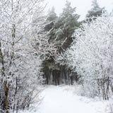 Väg för mystisk vinter för jul snöig i skogdimma, Ryssland Royaltyfria Bilder