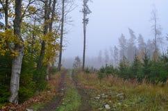 väg för skogkohmak Royaltyfri Bild
