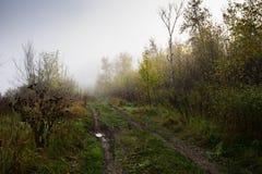 väg för skogkohmak Royaltyfria Bilder