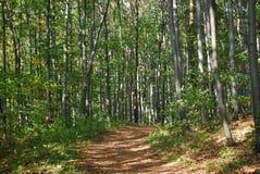 väg för skogkohmak Arkivbild