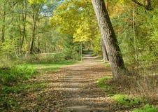 väg för skogkohmak Royaltyfri Foto